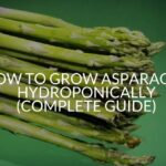 How To Grow Asparagus Hydroponically (Complete Guide)