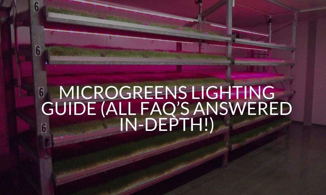 Microgreens Lighting Guide (All FAQ's Answered In-Depth!)