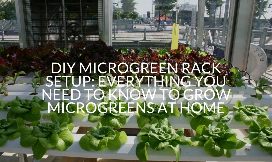 DIY Microgreen Rack Setup Everything You Need To Know To Grow Microgreens At Home