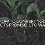 How To Convert Your Roots From Soil To Water