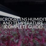 Microgreens Humidity And Temperature (Complete Guide)