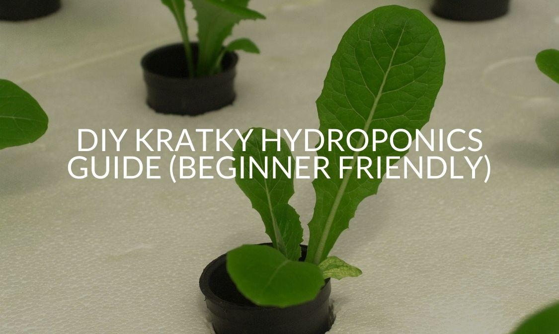 DIY Kratky Hydroponics Guide (Beginner Friendly)