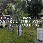 Ebb And Flow Vs Deep Water Culture (What Should You Pick?)