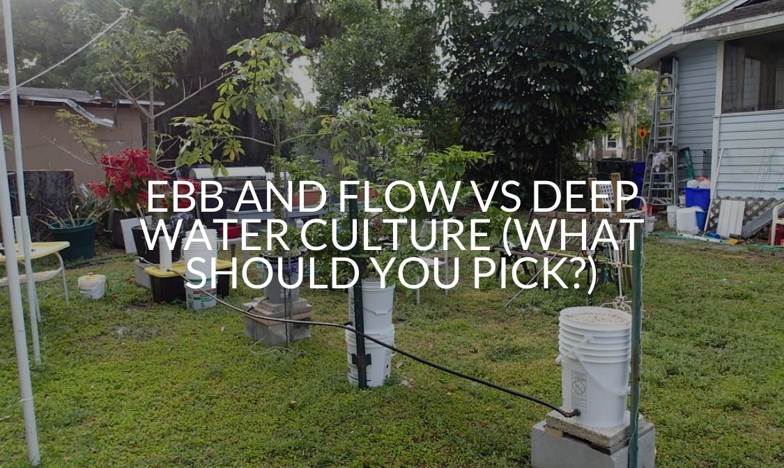 Ebb And Flow Vs Deep Water Culture (What Should You Pick)