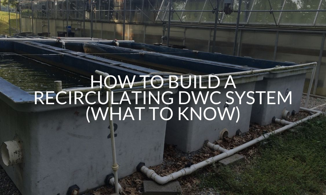 How To Build A Recirculating DWC System (What To Know)
