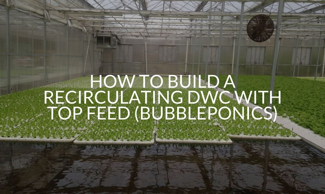 How To Build A Recirculating DWC With Top Feed (Bubbleponics)