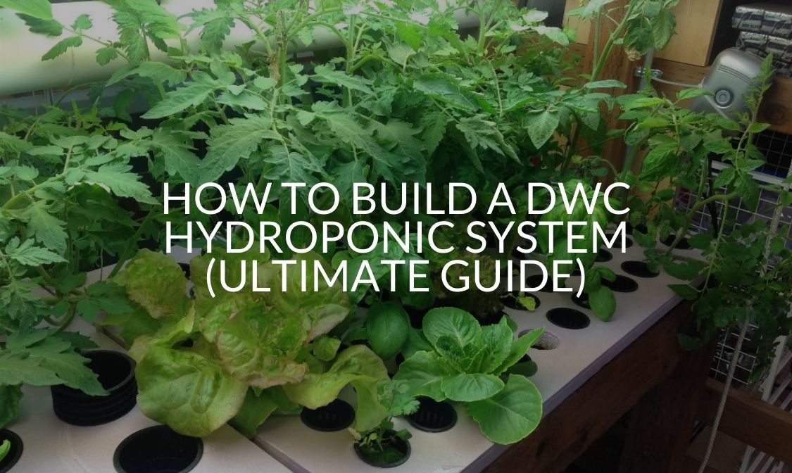 How to Build a DWC Hydroponic System (Ultimate Guide)