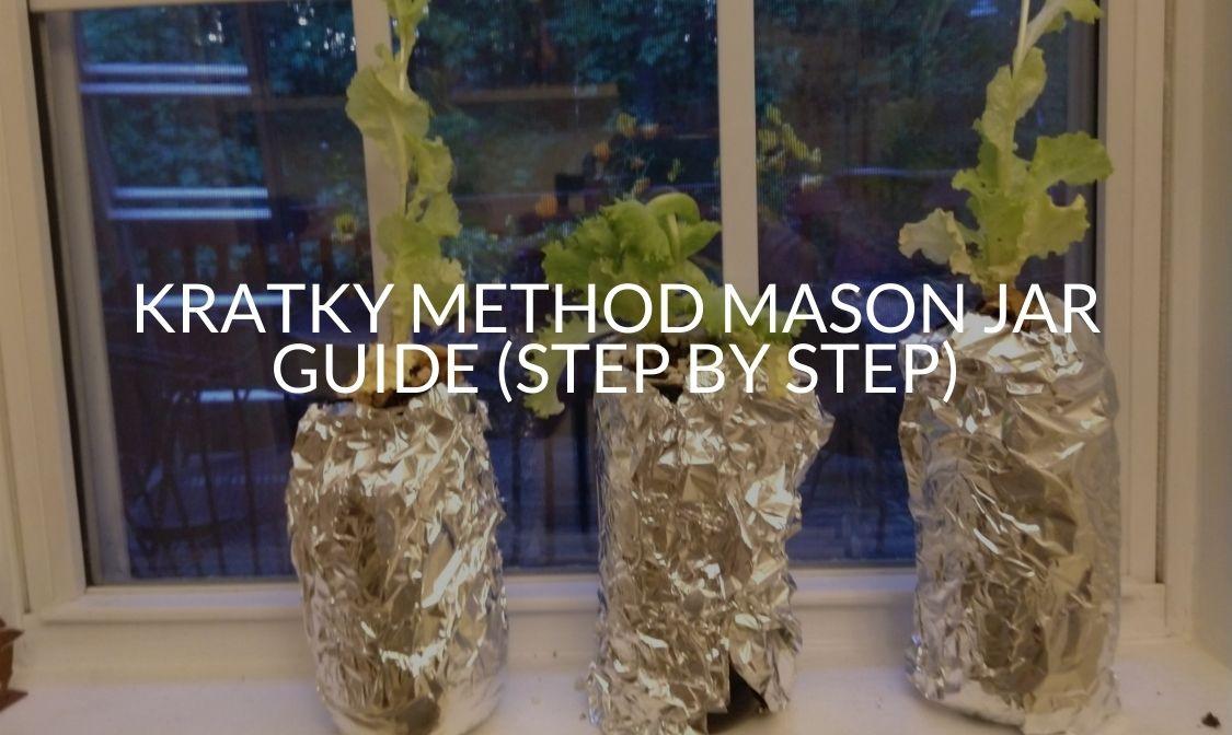 Kratky Method Mason Jar Guide (Step By Step)