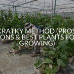 Kratky Method (Pros, Cons & Best Plants For Growing)