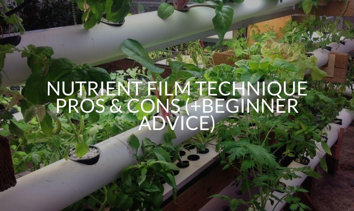 Nutrient Film Technique Pros & Cons (+Beginner Advice)