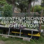 Nutrient Film Technique Vs Ebb And Flow (What's Right For You?)