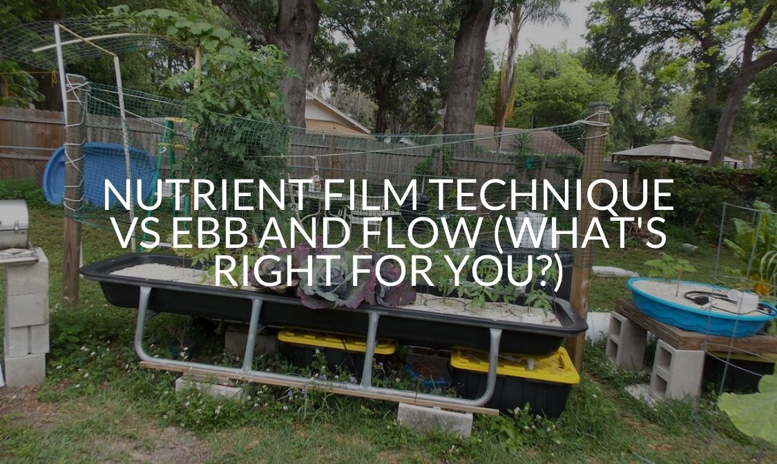 Nutrient Film Technique Vs Ebb And Flow (What's Right For You)