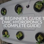 The Beginner's Guide to DWC Hydroponics (Complete Guide)