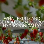 What Fruits And Vegetables Can Be Grown Hydroponically?