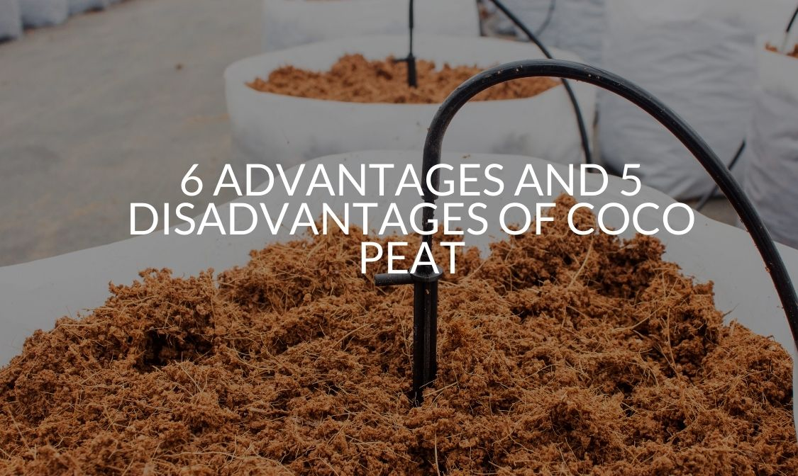 6 Advantages And 5 Disadvantages Of Coco Peat