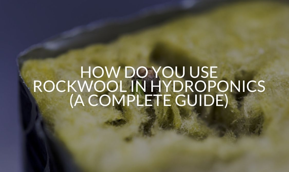 How Do You Use Rockwool In Hydroponics (A Complete Guide)
