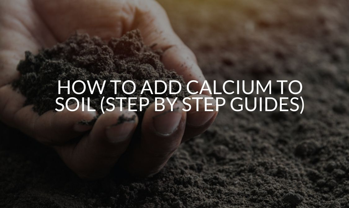 How To Add Calcium To Soil (Step By Step Guides)
