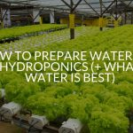 How To Prepare Water For Hydroponics (+ What Water Is Best)