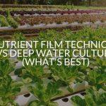 Nutrient Film Technique Vs Deep Water Culture (What's Best)