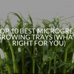 Top 10 Best Microgreen Growing Trays (What's Right For You)